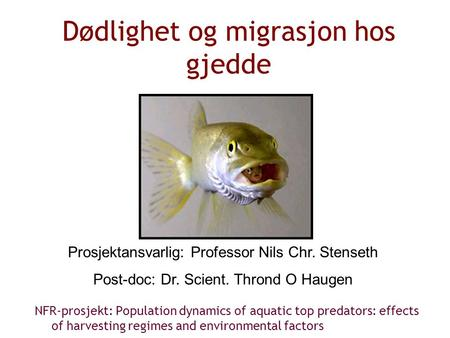 Dødlighet og migrasjon hos gjedde NFR-prosjekt: Population dynamics of aquatic top predators: effects of harvesting regimes and environmental factors Prosjektansvarlig: