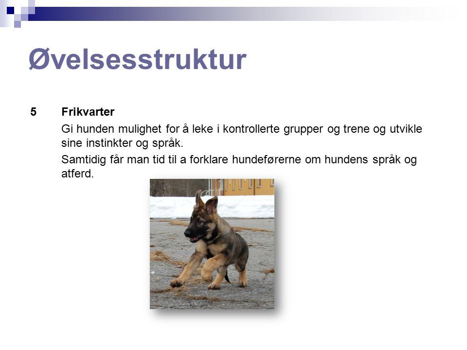 Øvelser - Miljøtrening Valp hilser på mennesker: Instruktør forklarer hundeførerne reglene for å hilse hilser korrekt.