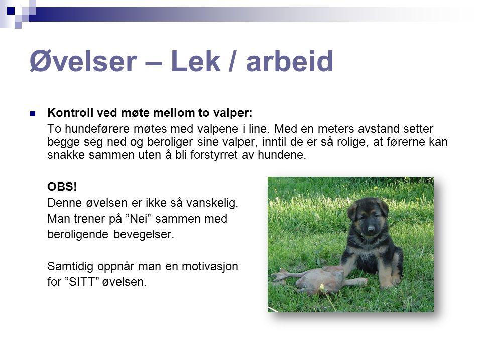 Øvelser – Lek / arbeid Ikke hoppe opp på mennesker: Instruktør og hundeførere hilser på valpene som hopper opp.