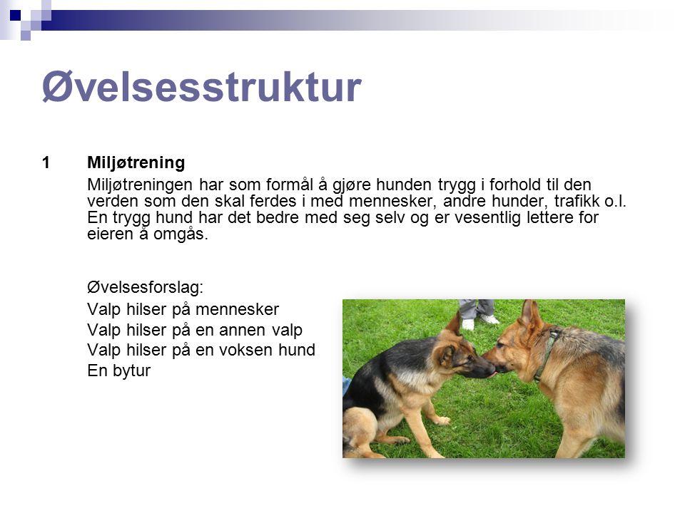 Øvelsesstruktur 2Instinktarbeide Har som funksjon å stimulere valpen gjennom anvendelse av dens instinkter og samtidig bygge et arbeidsfellesskap mellom hund og fører.