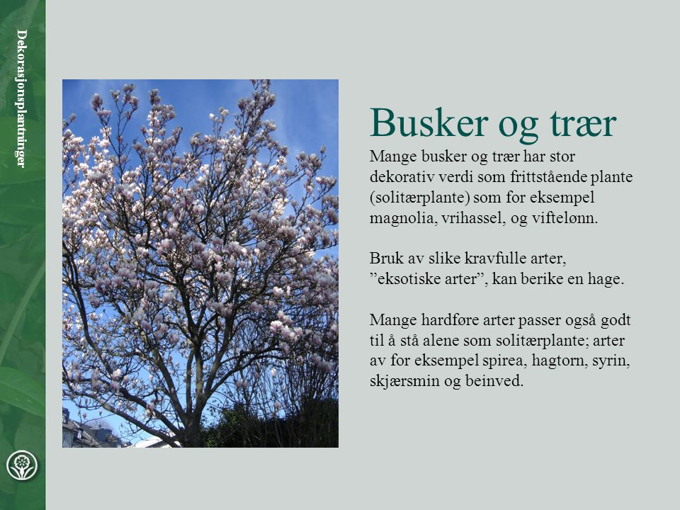 Syrin har flott blomstring og er svært hardfør (som solitærbusk eller lite tre).