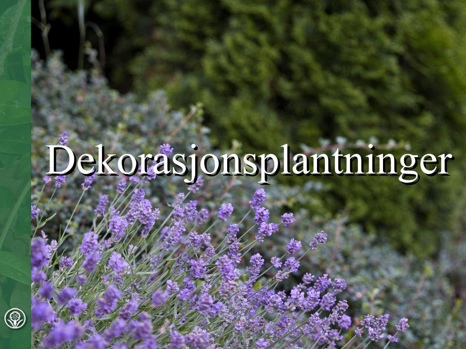 Plantene kan gi opplevelse av vekslingene mellom de ulike årstidene eller ha andre spesielle egenskaper som gir særpreg og vil ofte være et naturlig blikkfang.