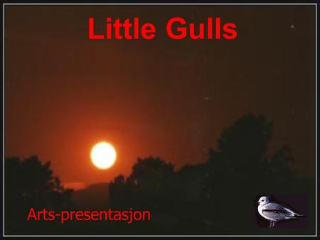 Little Gulls Arts-presentasjon.