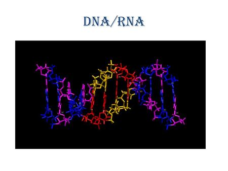 DNA/RNA http://www.youtube.com/watch?v=qy8dk5iS1f0.