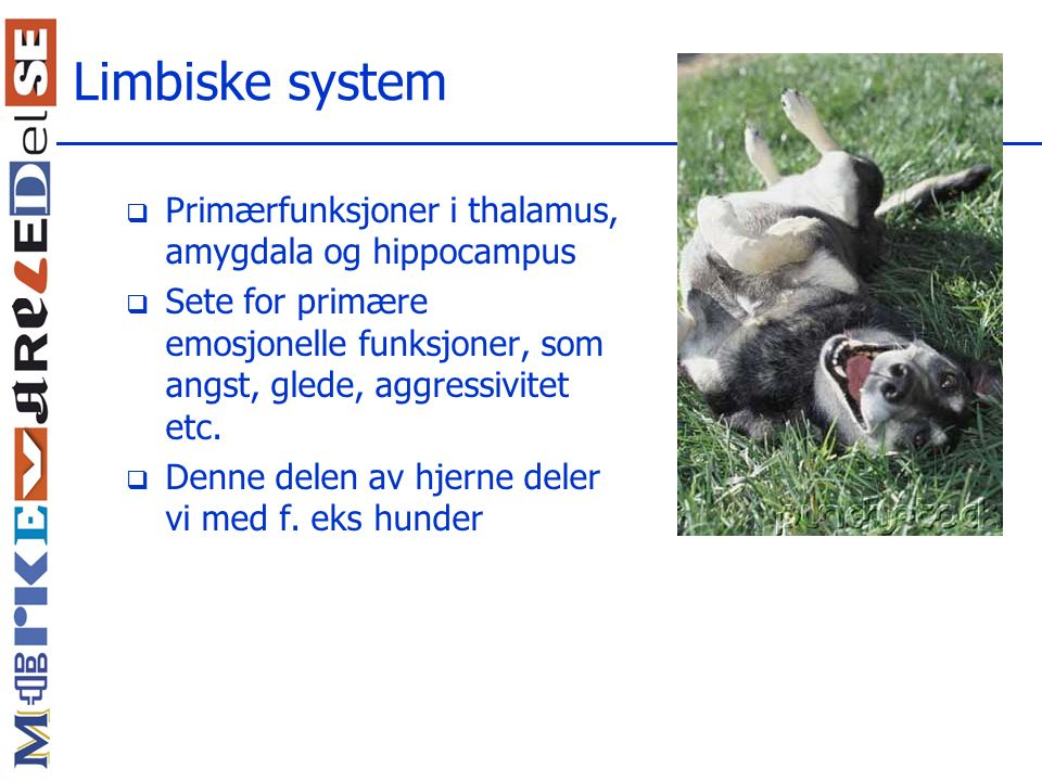 Limbiske system Primærfunksjoner i thalamus, amygdala og hippocampus