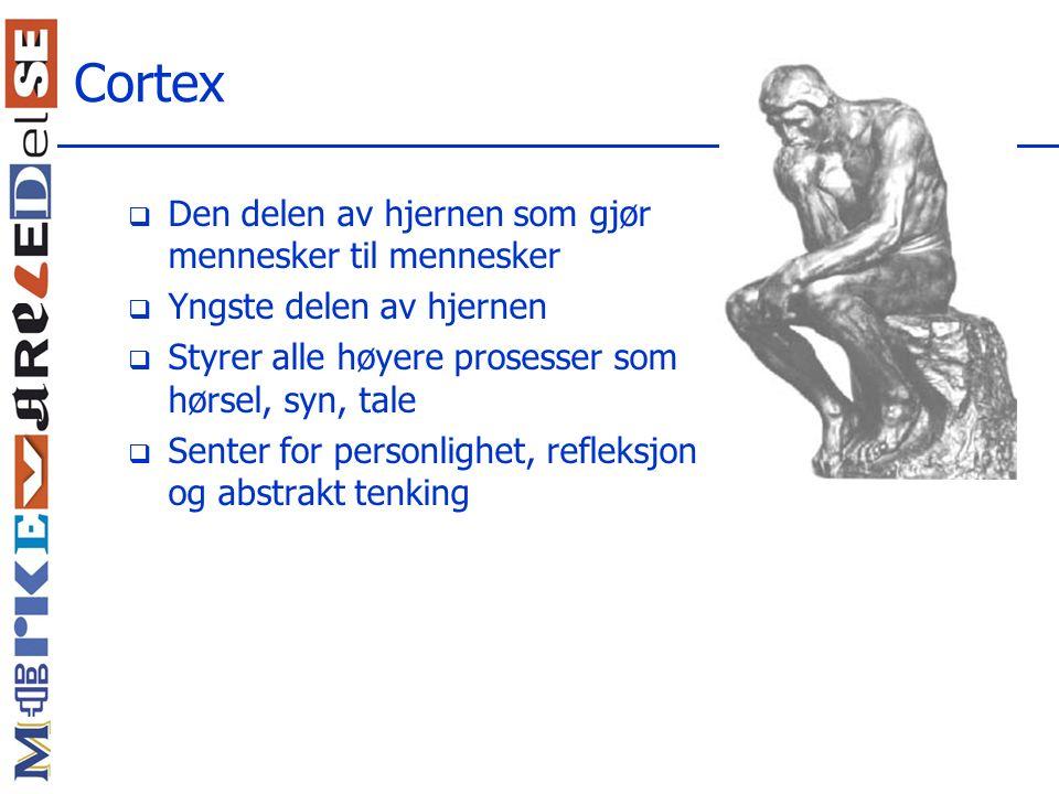 Cortex Den delen av hjernen som gjør mennesker til mennesker