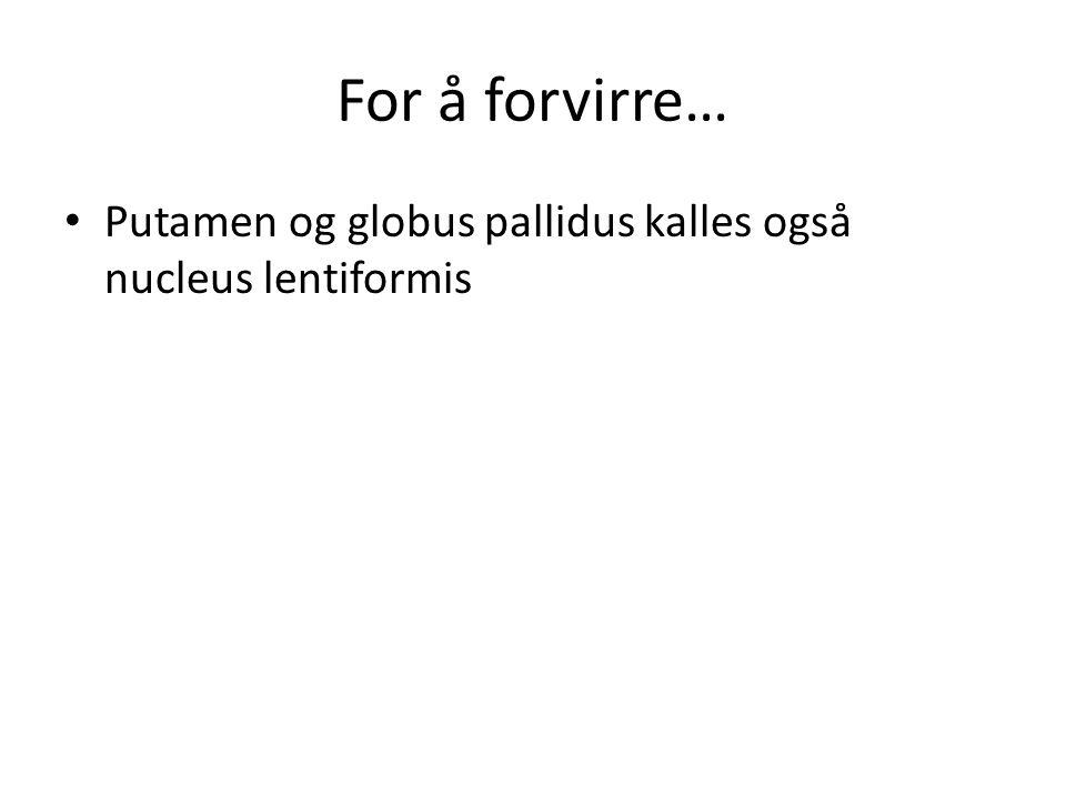 For å forvirre… Putamen og globus pallidus kalles også nucleus lentiformis