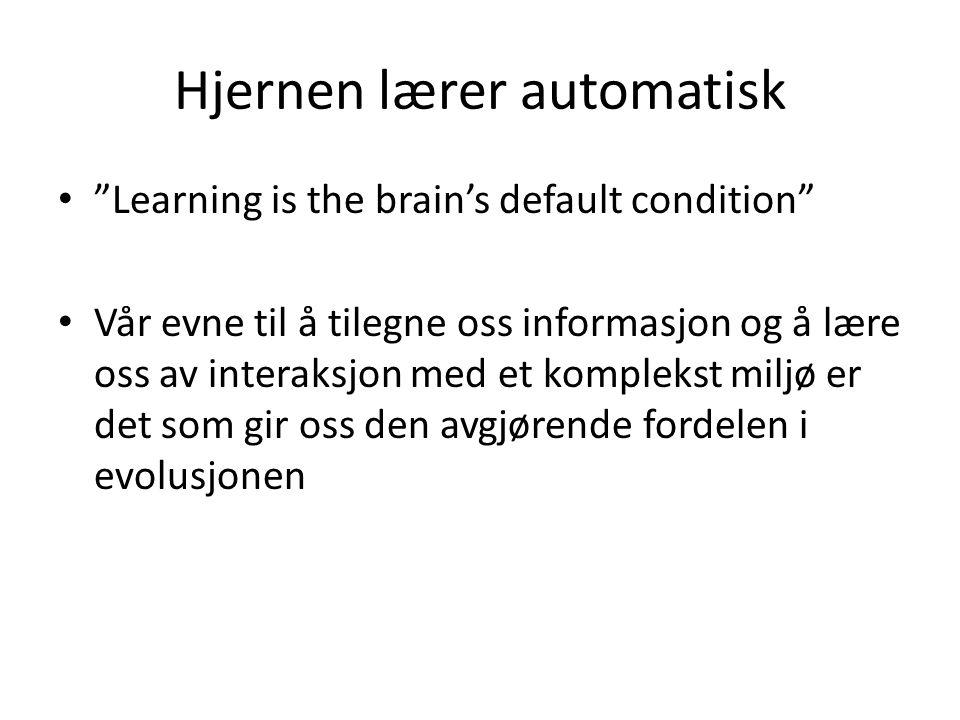Hjernen lærer automatisk