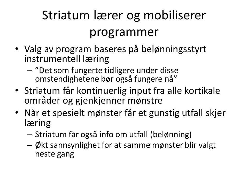 Striatum lærer og mobiliserer programmer