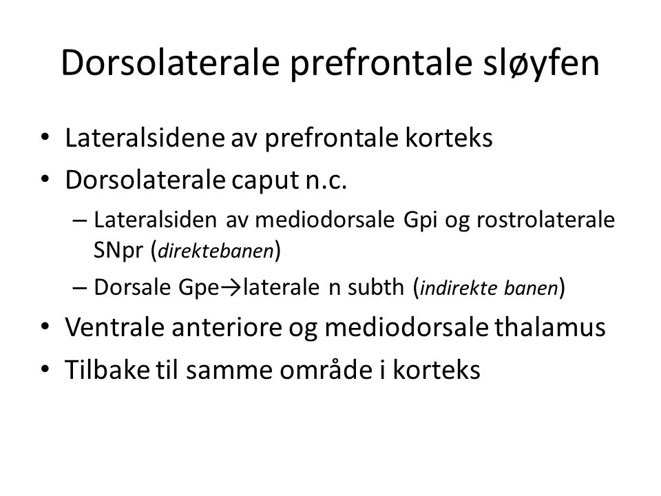 Dorsolaterale prefrontale sløyfen
