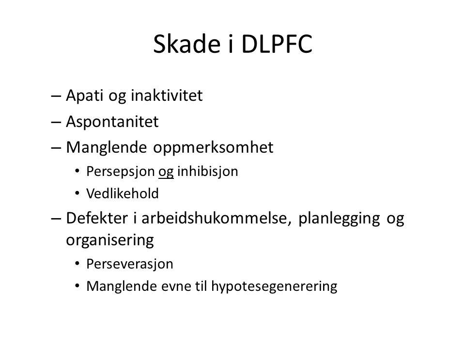 Skade i DLPFC Apati og inaktivitet Aspontanitet