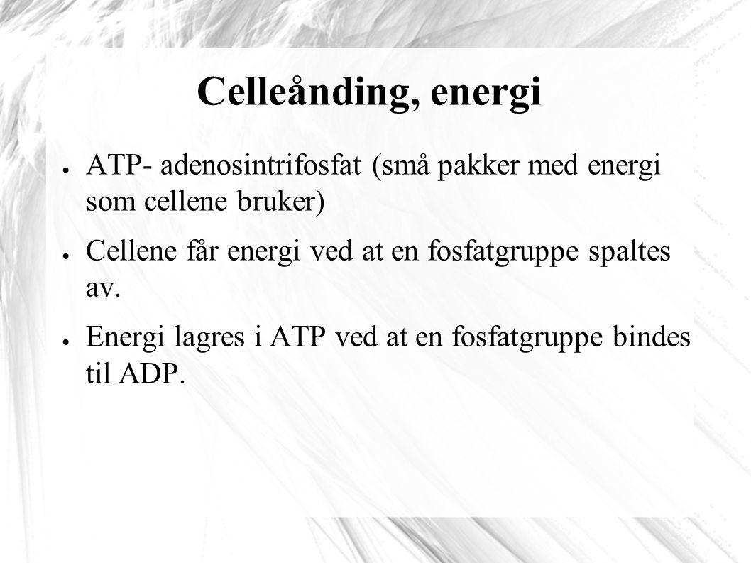 Celleånding, energi ATP- adenosintrifosfat (små pakker med energi som cellene bruker) Cellene får energi ved at en fosfatgruppe spaltes av.