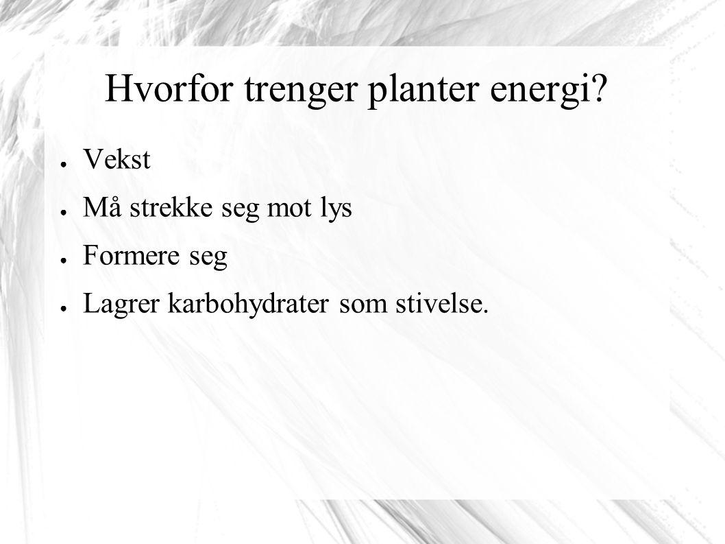 Hvorfor trenger planter energi