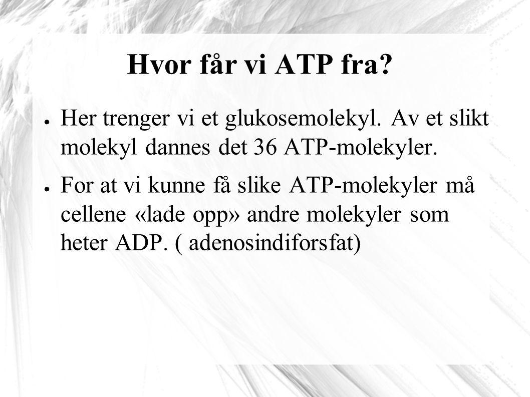 Hvor får vi ATP fra Her trenger vi et glukosemolekyl. Av et slikt molekyl dannes det 36 ATP-molekyler.