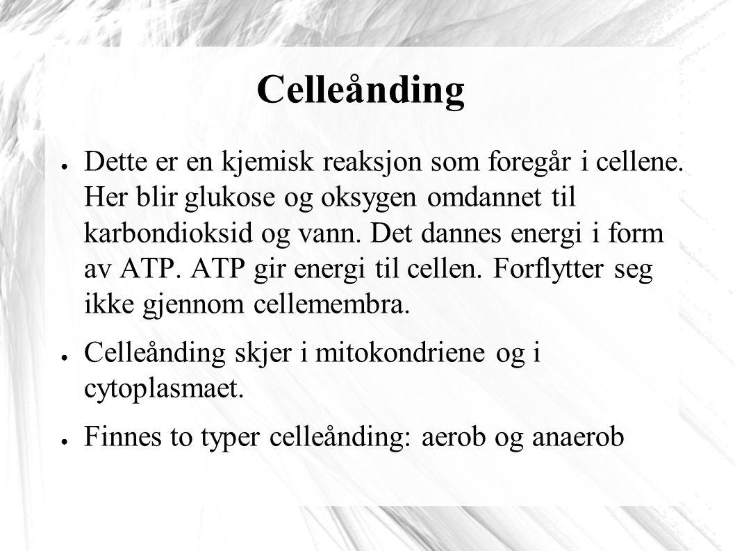 Celleånding