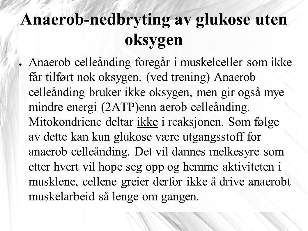 Anaerob-nedbryting av glukose uten oksygen