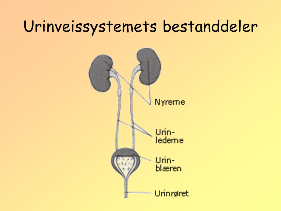 Urinveissystemets bestanddeler