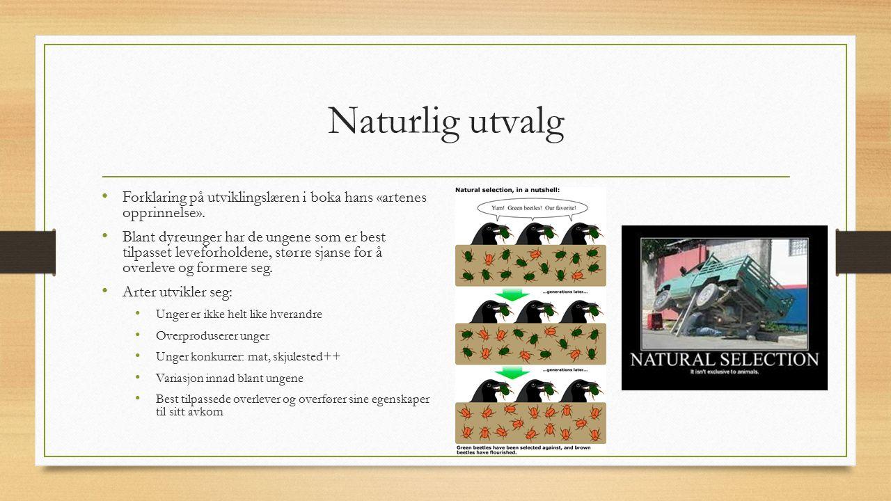 Naturlig utvalg Forklaring på utviklingslæren i boka hans «artenes opprinnelse».