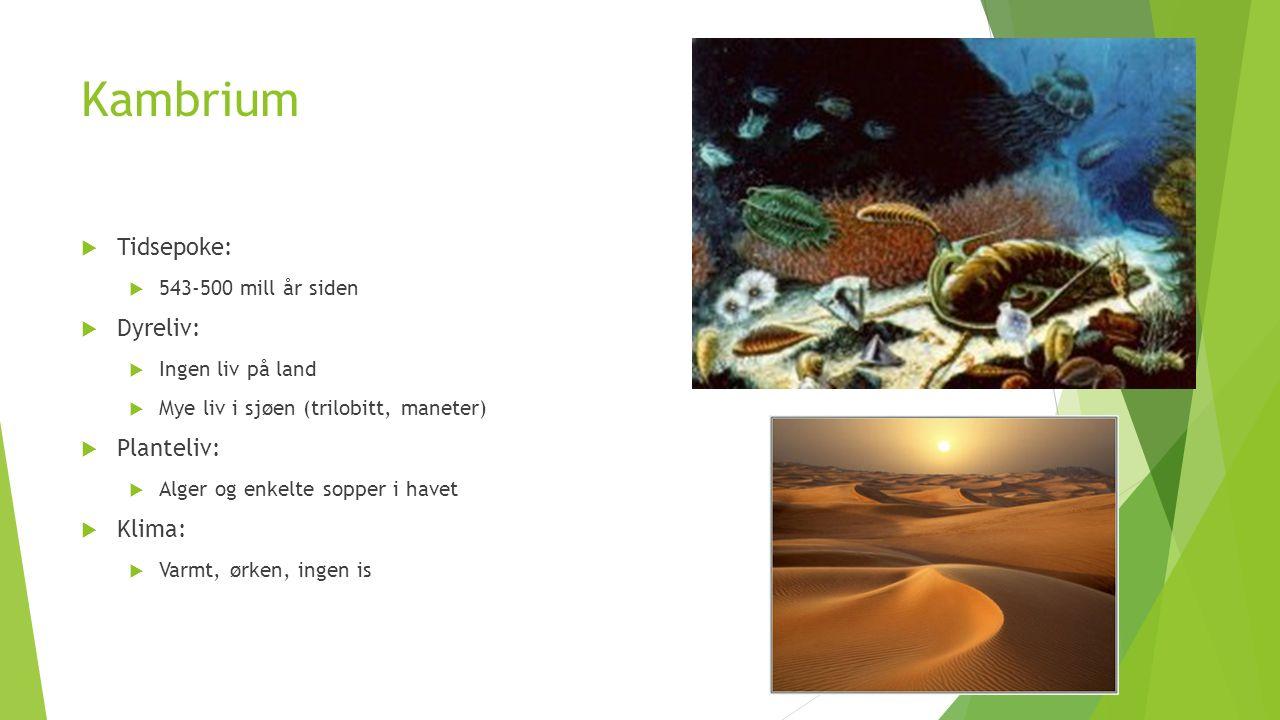 Kambrium Tidsepoke: Dyreliv: Planteliv: Klima: 543-500 mill år siden