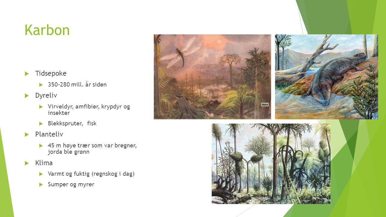 Karbon Tidsepoke Dyreliv Planteliv Klima 350-280 mill. år siden