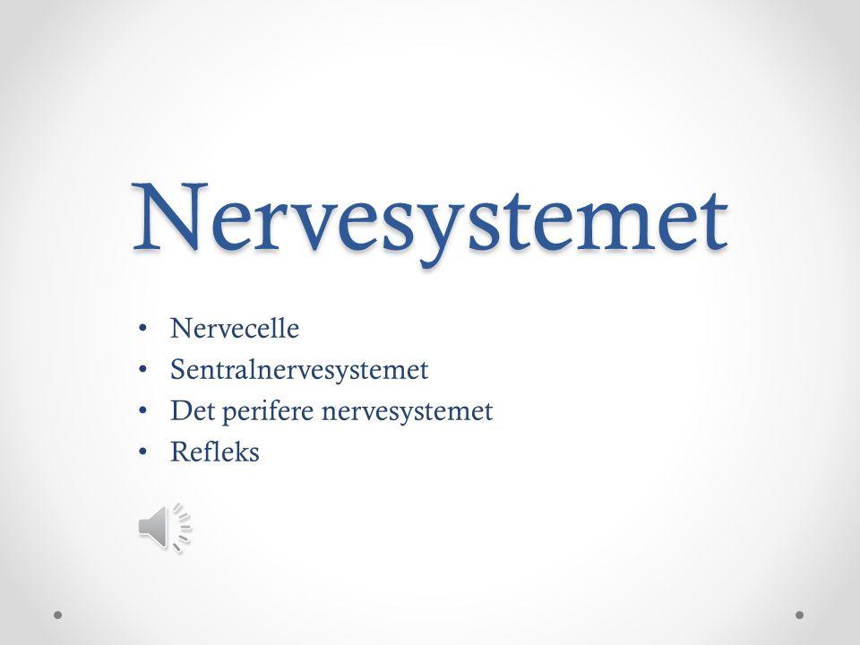 Nervecelle Sentralnervesystemet Det perifere nervesystemet Refleks