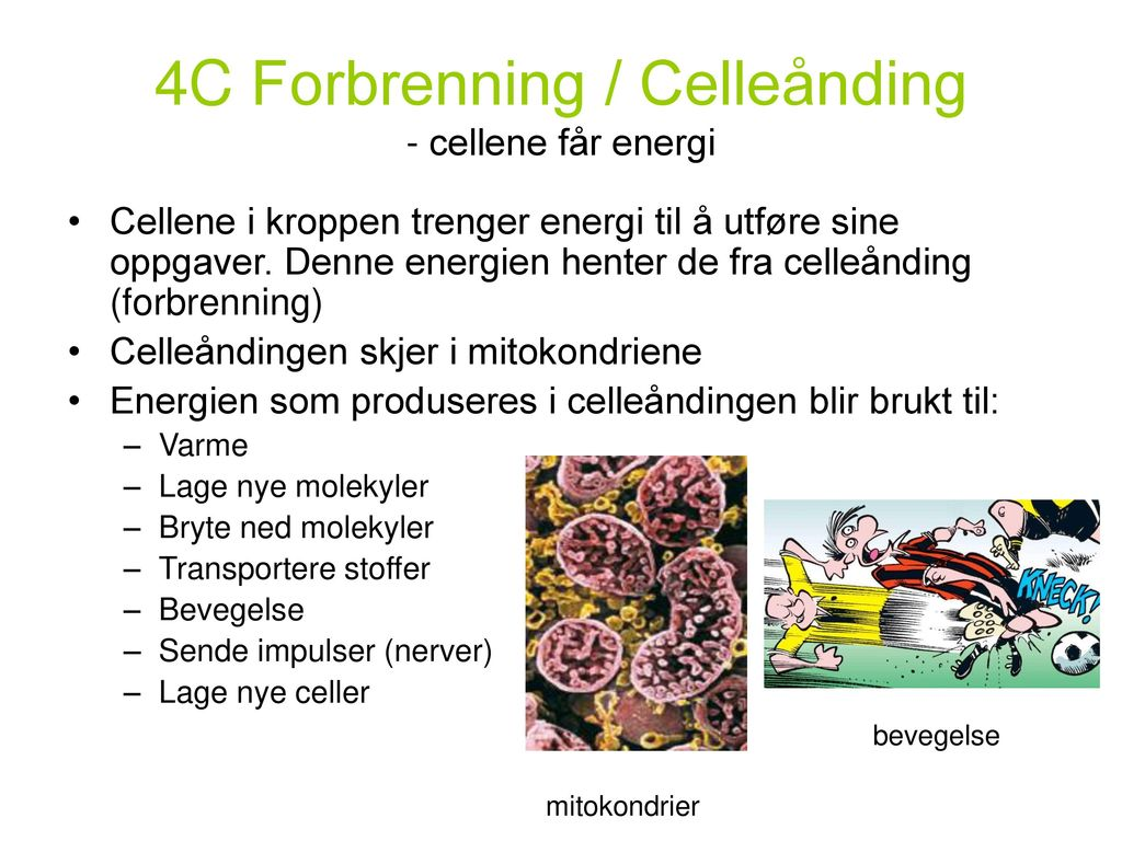 4C Forbrenning / Celleånding - cellene får energi
