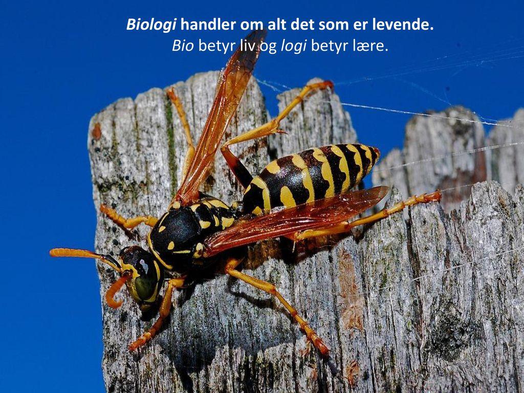 Biologi handler om alt det som er levende.