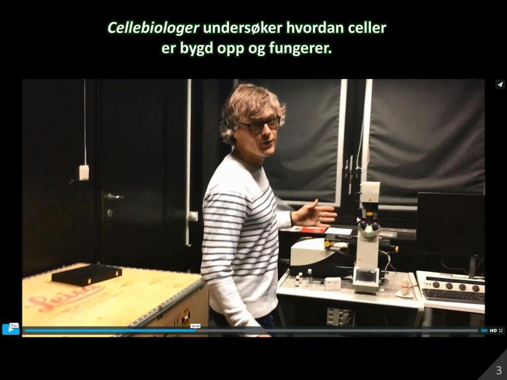 Cellebiologer undersøker hvordan celler er bygd opp og fungerer.