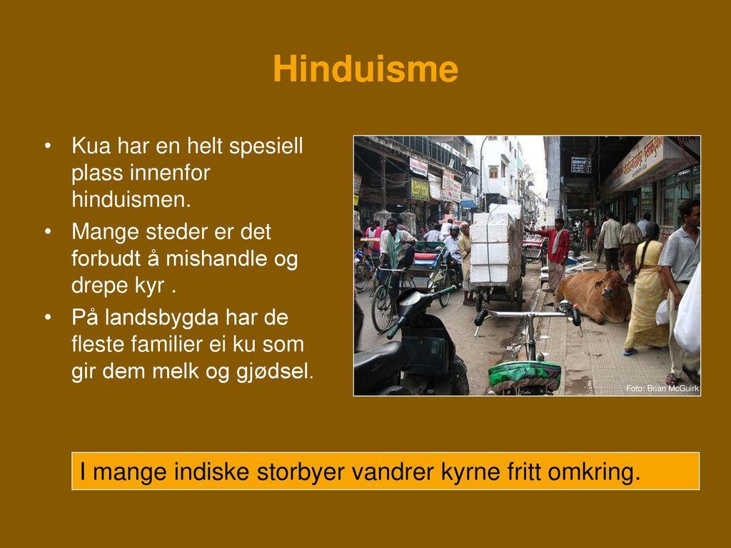 Hinduisme I mange indiske storbyer vandrer kyrne fritt omkring.