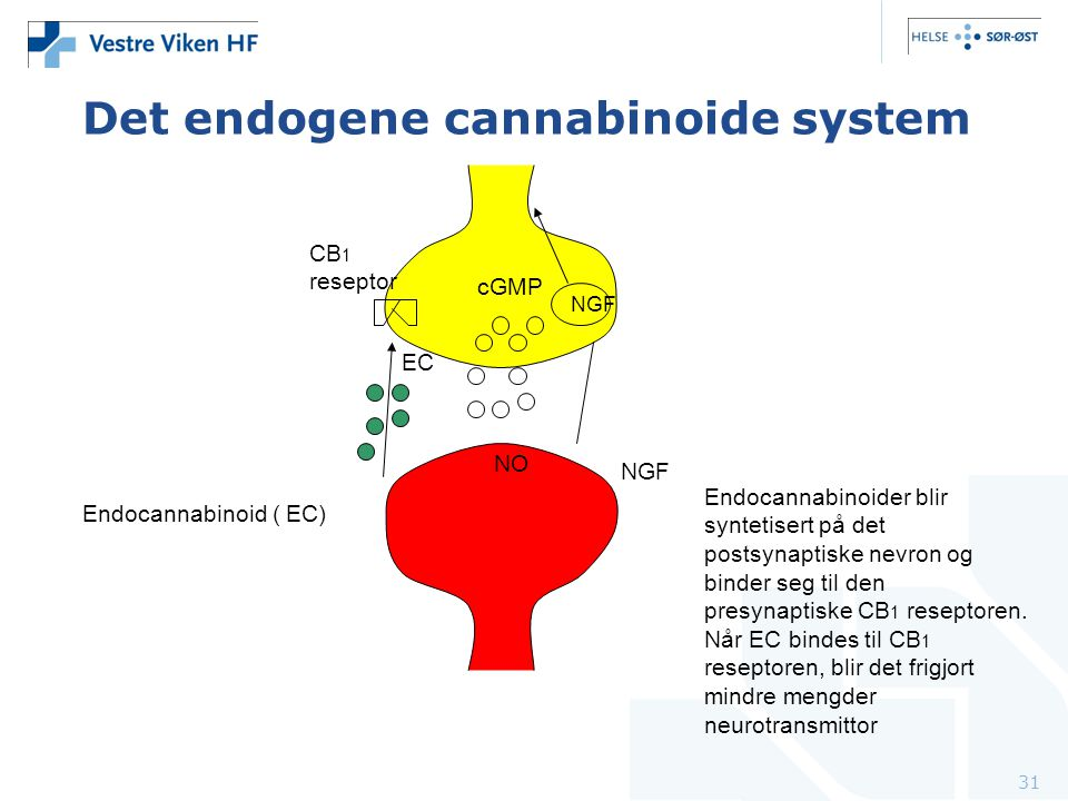 Det endogene cannabinoide system