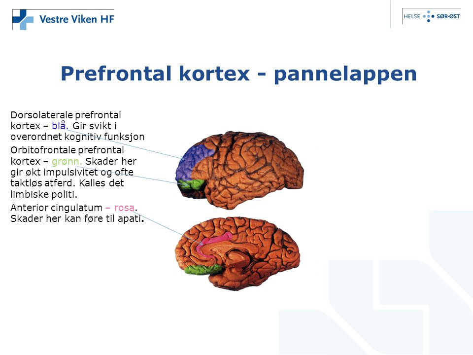 Prefrontal kortex - pannelappen