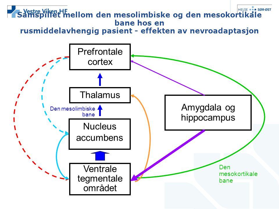 Amygdala og hippocampus