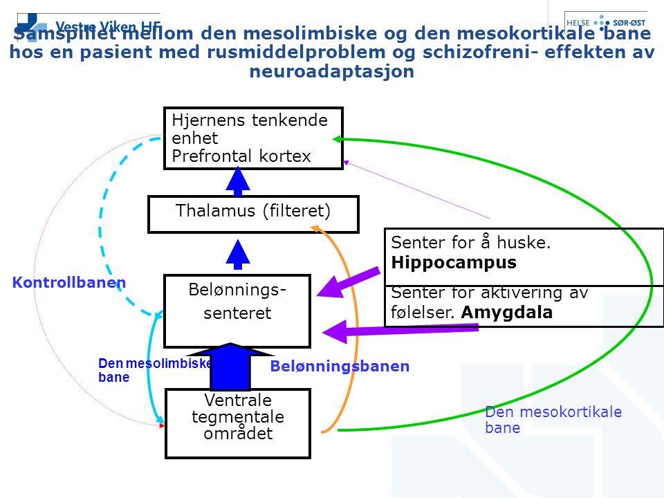 Samspillet mellom den mesolimbiske og den mesokortikale bane hos en pasient med rusmiddelproblem og schizofreni- effekten av neuroadaptasjon
