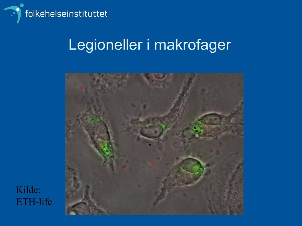 Legioneller i makrofager