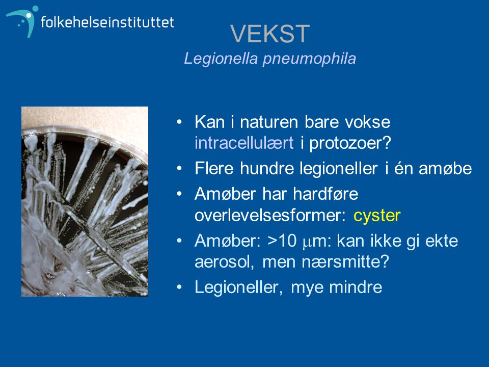 VEKST Legionella pneumophila