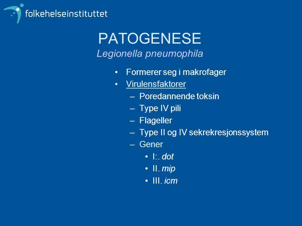 PATOGENESE Legionella pneumophila