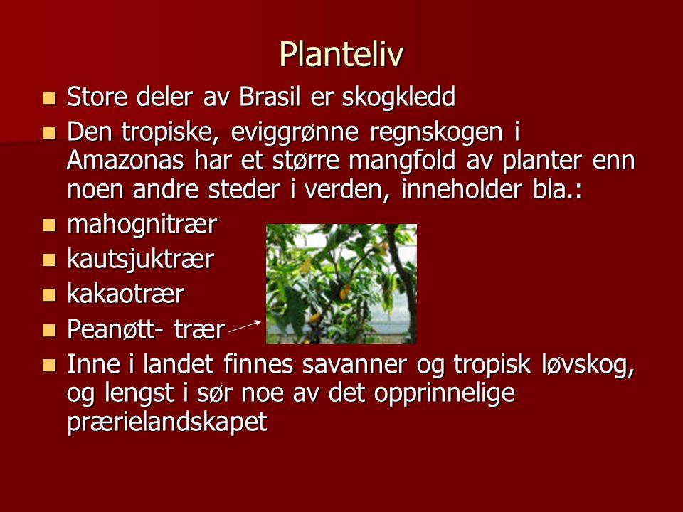 Planteliv Store deler av Brasil er skogkledd