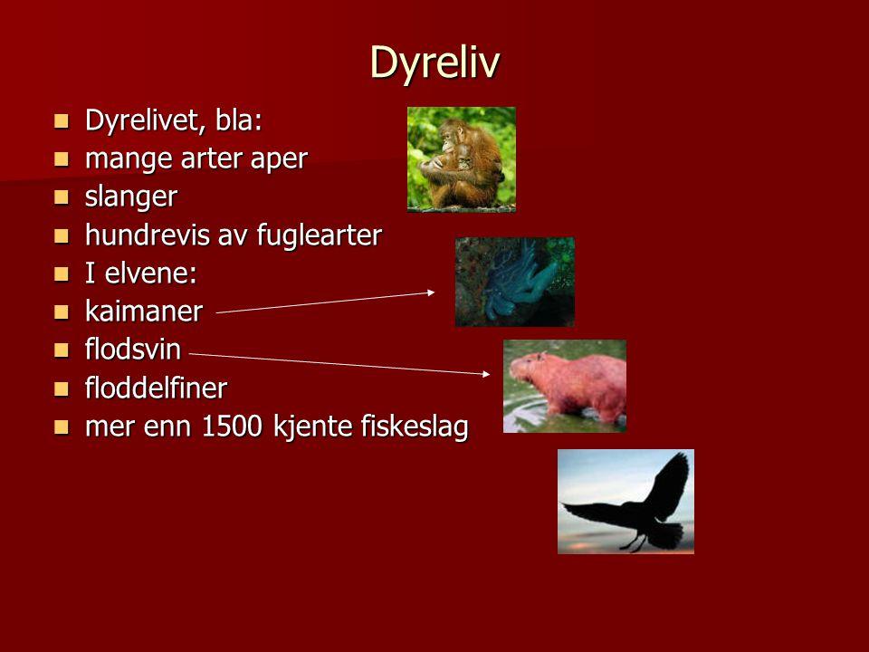Dyreliv Dyrelivet, bla: mange arter aper slanger