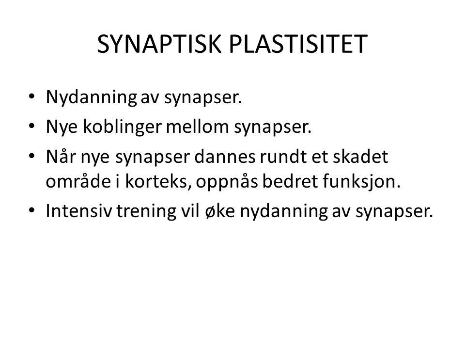 SYNAPTISK PLASTISITET