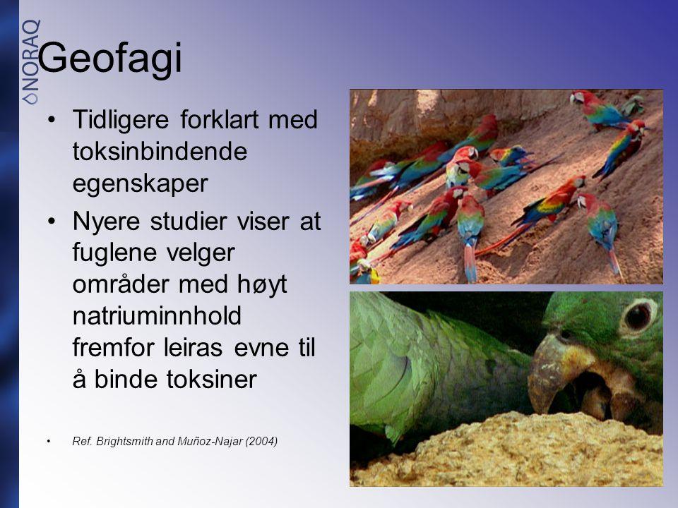 Geofagi Tidligere forklart med toksinbindende egenskaper