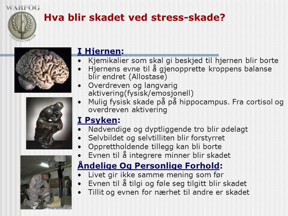 Hva blir skadet ved stress-skade