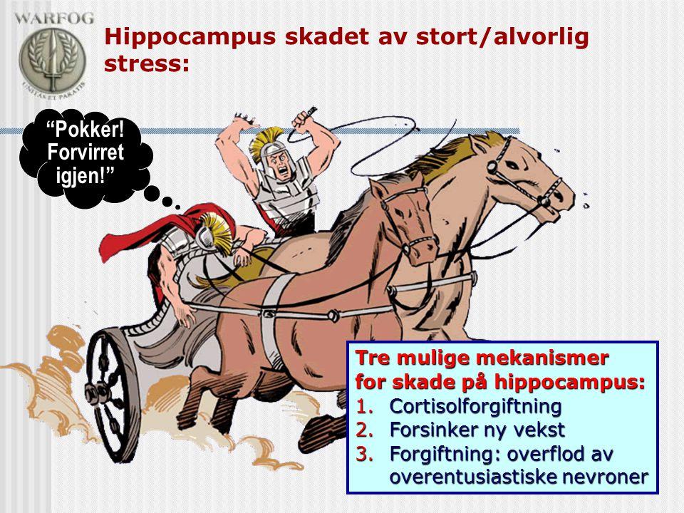 Hippocampus skadet av stort/alvorlig stress:
