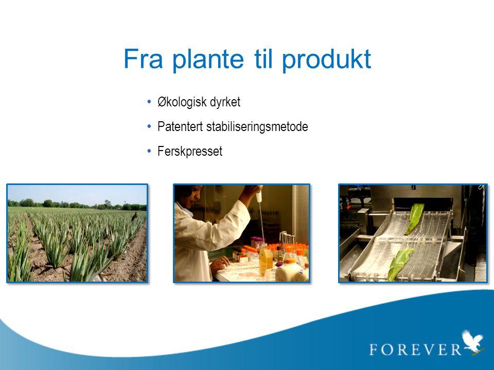 Fra plante til produkt Økologisk dyrket Patentert stabiliseringsmetode