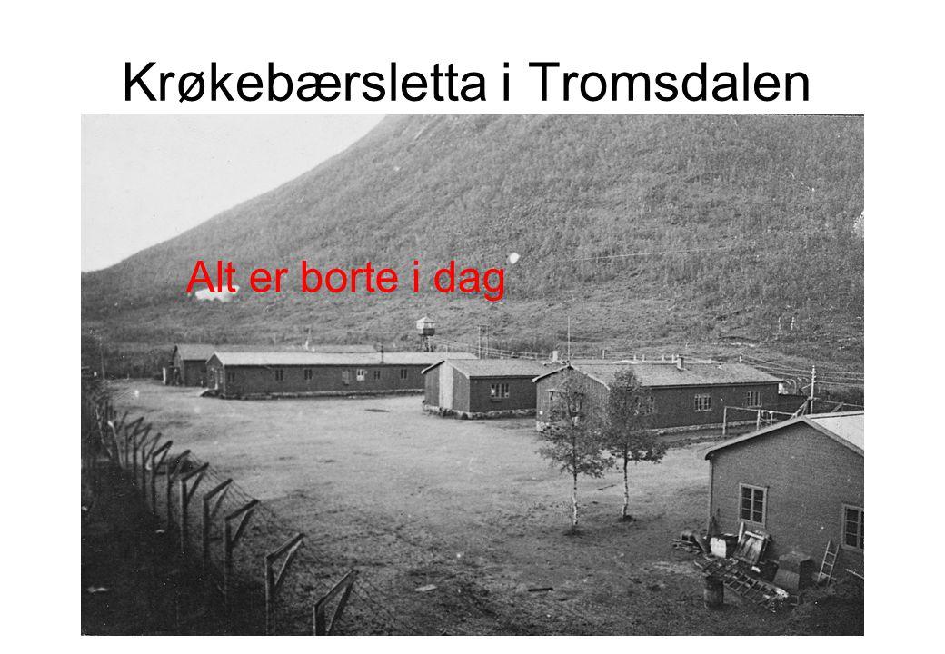 Krøkebærsletta i Tromsdalen