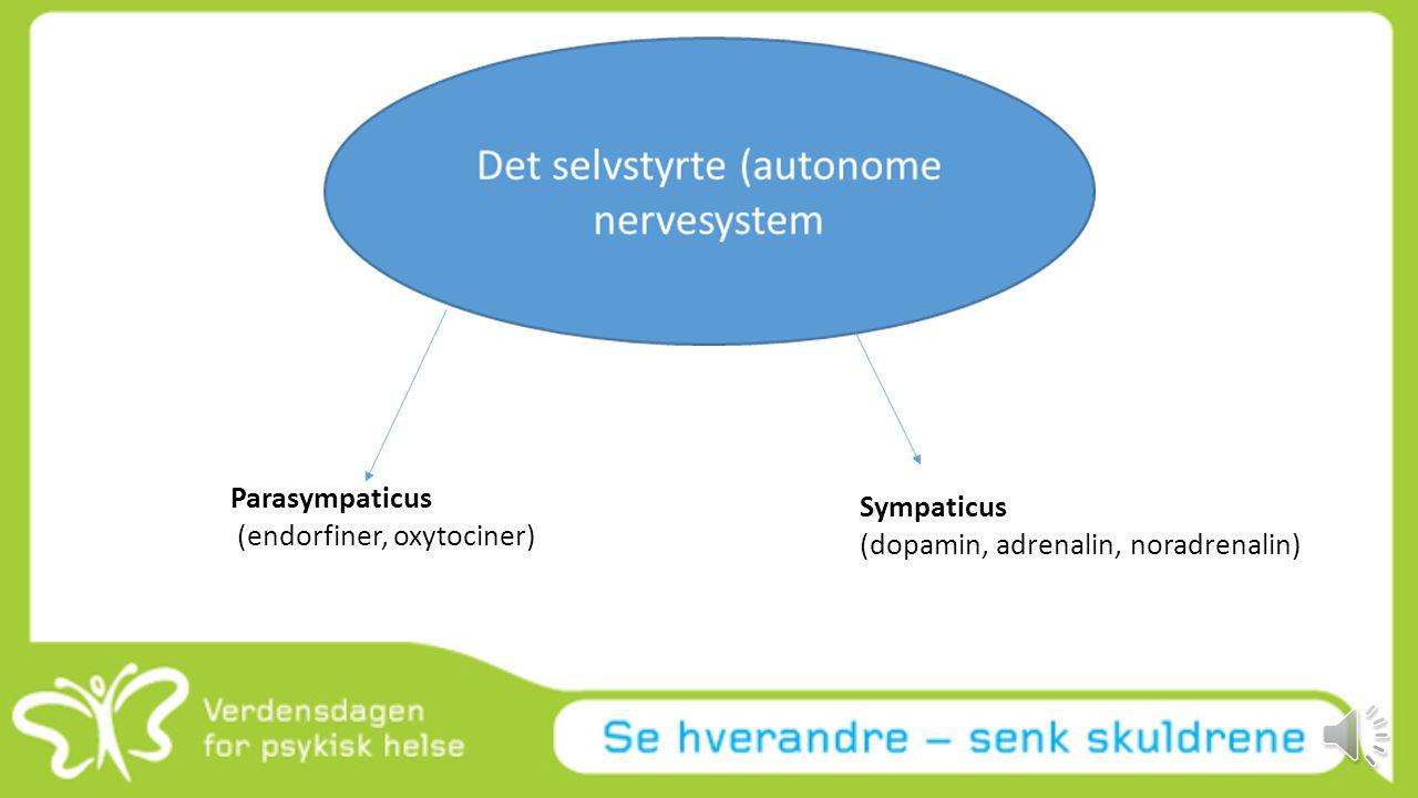 (endorfiner, oxytociner) Sympaticus (dopamin, adrenalin, noradrenalin)