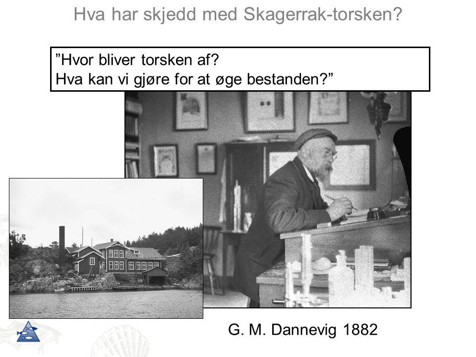 Hva har skjedd med Skagerrak-torsken