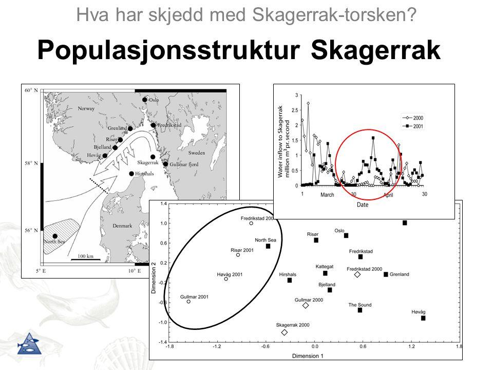 Populasjonsstruktur Skagerrak