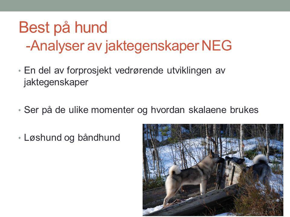 Best på hund -Analyser av jaktegenskaper NEG