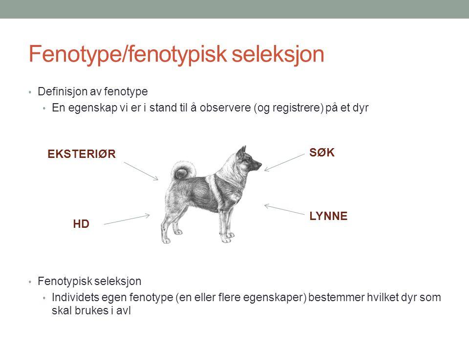 Fenotype/fenotypisk seleksjon