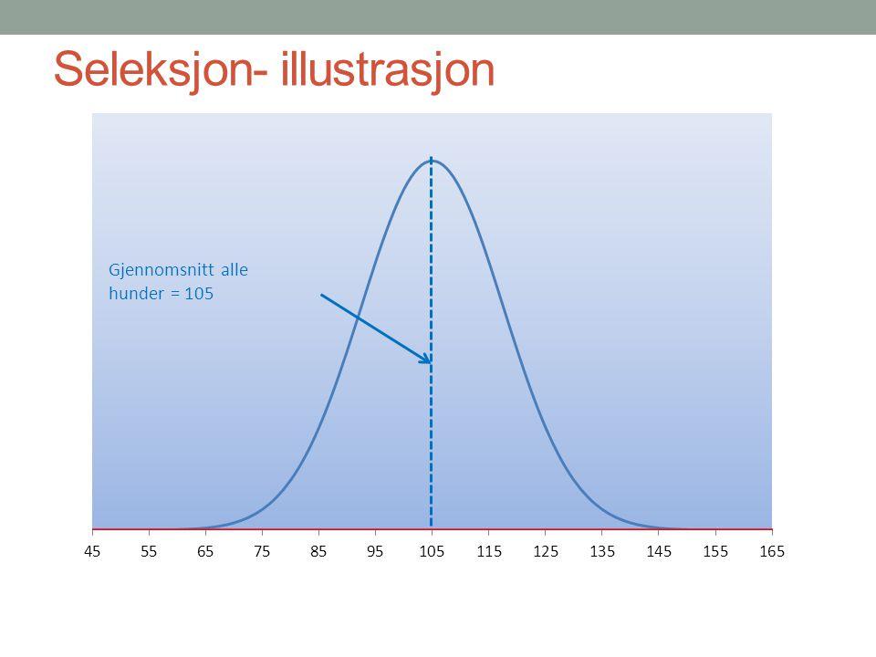 Seleksjon- illustrasjon